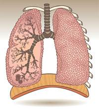 Image of Lungs and diaphram